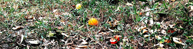 Fruit on the ground