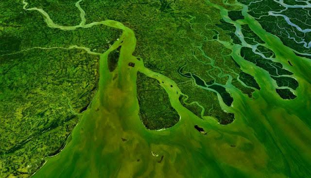 Gambar Delta Sungai Gangga yang unik