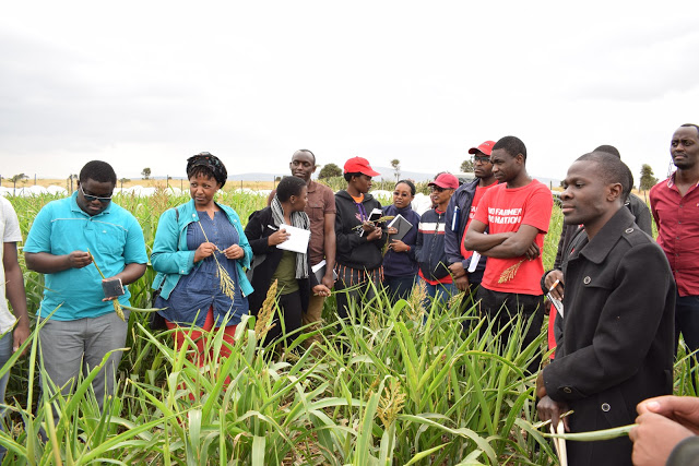 A double tragedy for Africa's Agriculture: COVID-19 exposes African agriculture by targeting its main  source of agricultural labor - the elderly!