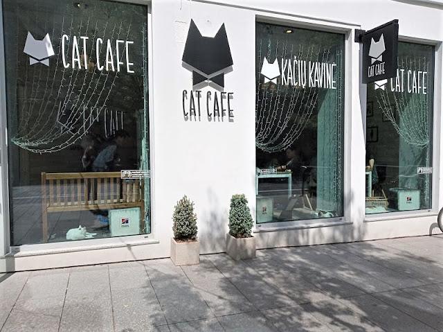 vetrina del cat cafe a vilnius
