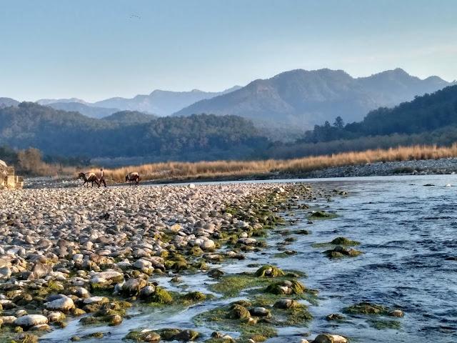 कोशी नदी