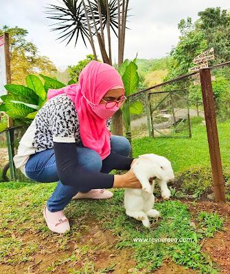 Taman kelinci Trawas