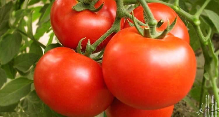 蕃茄的圖片搜尋結果