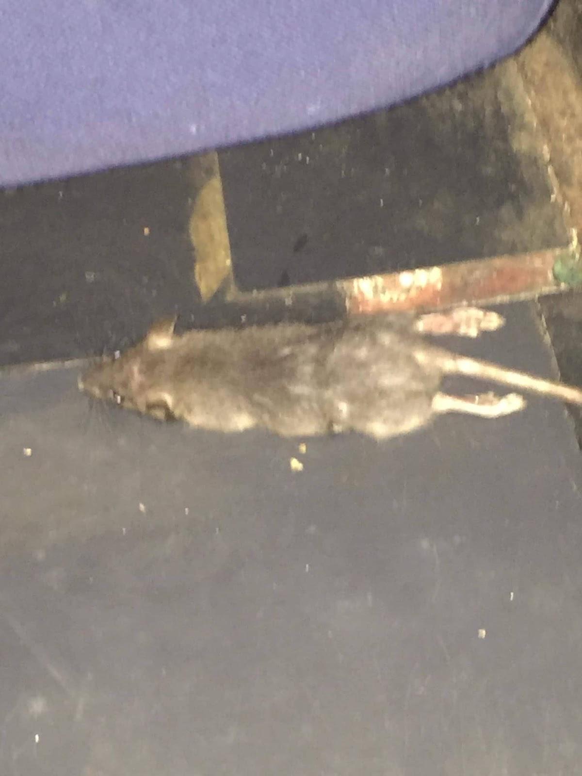 Child gets bitten by a rat inside a cinema in Iloilo