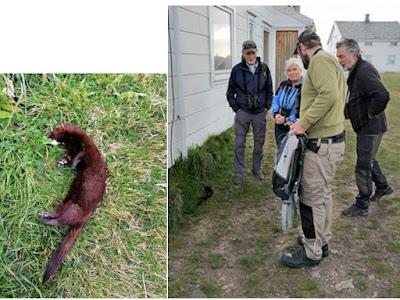 Her er stakkaren sammen med jegeren  og noen av turdeltakerene, Kjell, Sissel, jegeren og Odd Foto: Rolf sunde