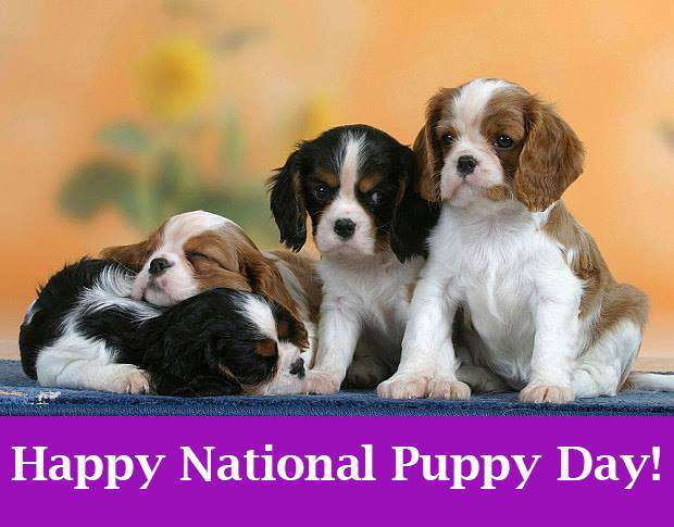 National Puppy Day Wishes Images