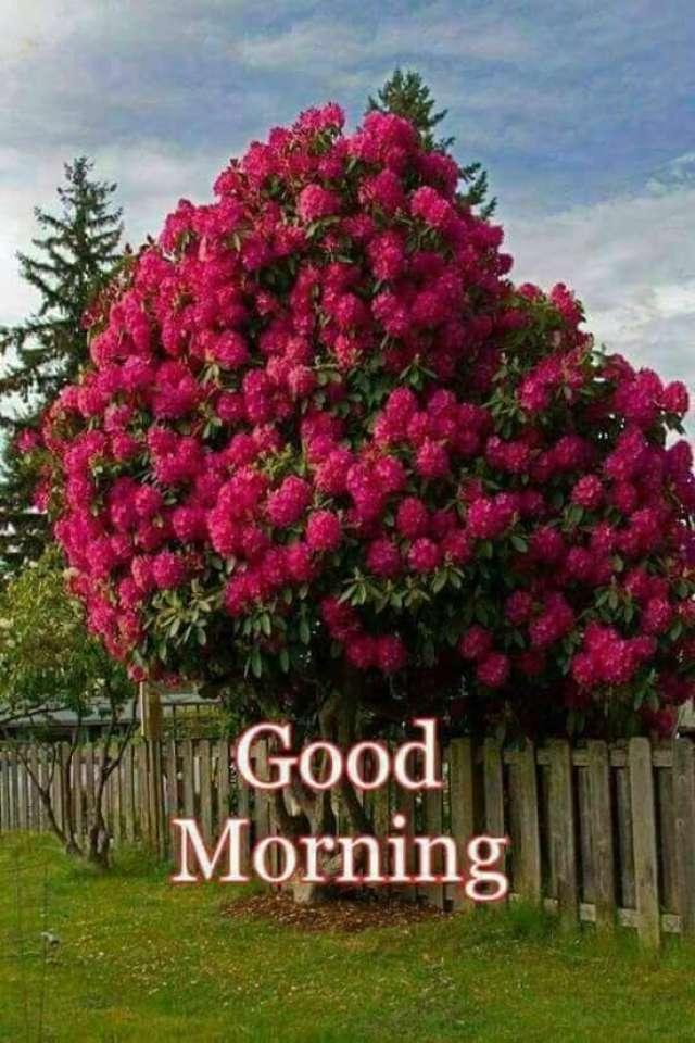 best good morning images new good morning wallpaper good morning