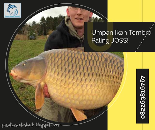 Resep Rahasia Umpan Ikan Tombro Andalan Para Juara Joss Kaskus
