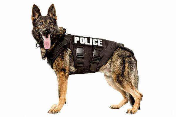 dogs drug detection