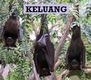 UAS: Kalau Tak Kenal Syaikh Burhanuddin, Saya Kini Masih Makan Kelelawar