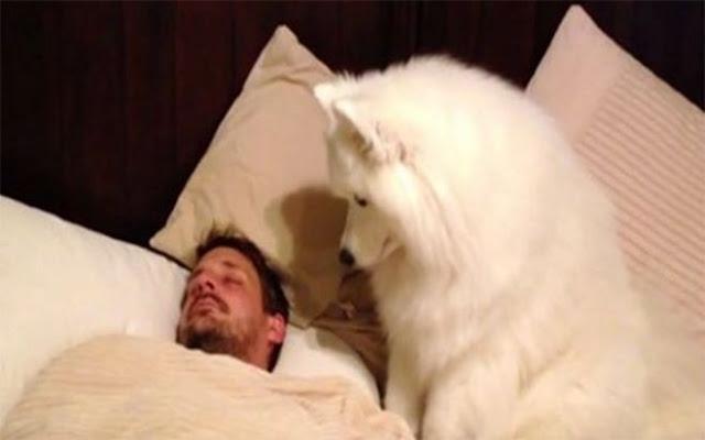 Δεν πίστευαν πόσο γλυκά τον ξυπνάει ο σκύλος του κάθε πρωί, ώσπου το έγραψε σε κάμερα!