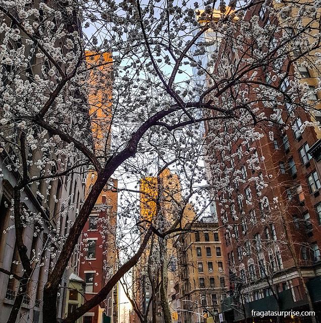 Primavera em Nova York, Rua 39 Leste