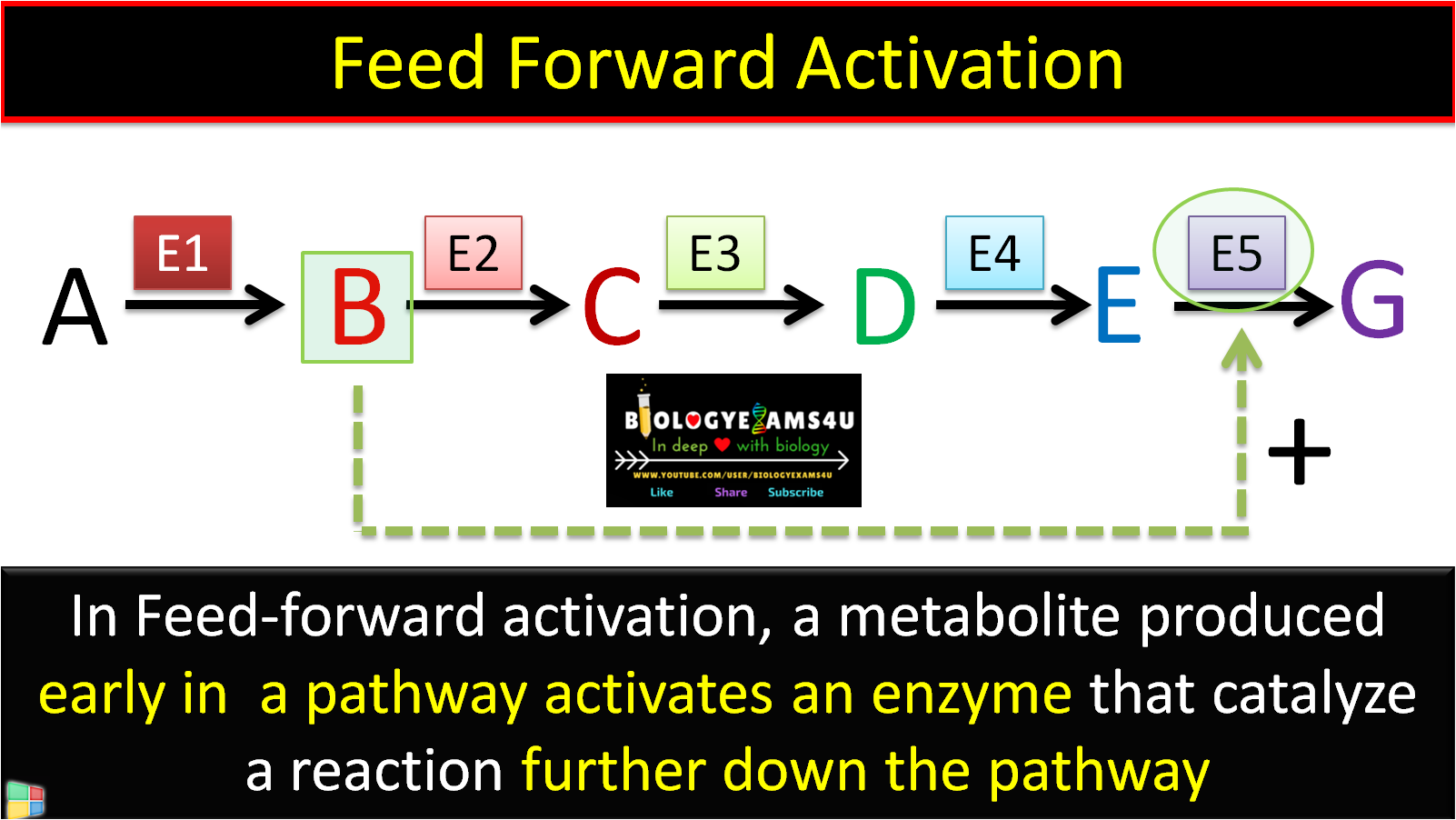 feed forward activation of enzymes