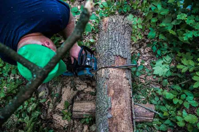 What to Consider When It Comes To Tree Services