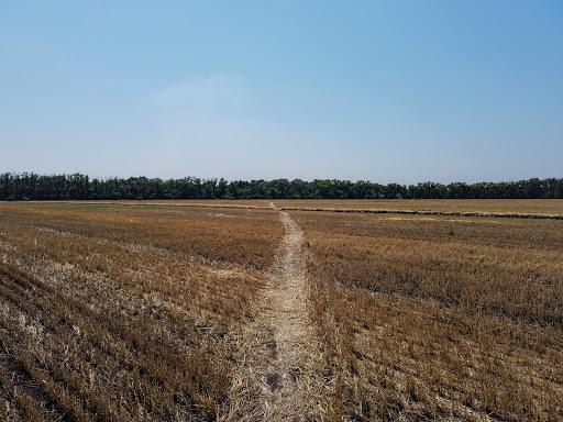 Райполе, Межевской р-н. Скошенное поле