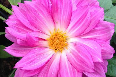 Flores de bellos colores que nos hacen saludables