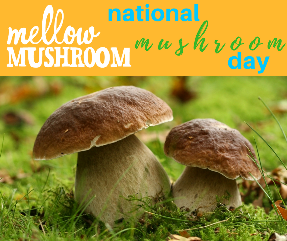 National Mushroom Day Wishes Pics
