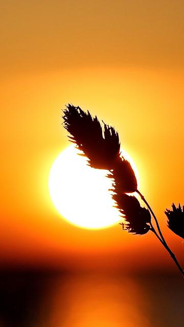 HD wallpaper Beautiful sunset