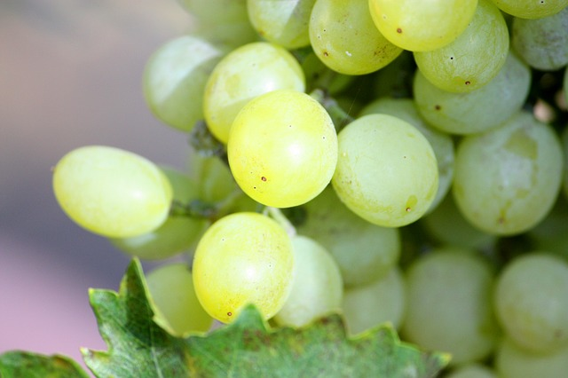 Green Grapes are Mostly Glucose