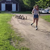 Farm Shares Videos Of The Cutest Stampede To Ever begin