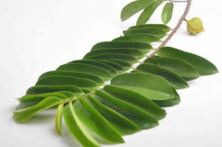 Is it save consuming soursop leaves?