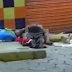 """VÍDEO: CASAL É FLAGRADO """"MAT4NDO BOI"""" NO MAUAZINHO"""