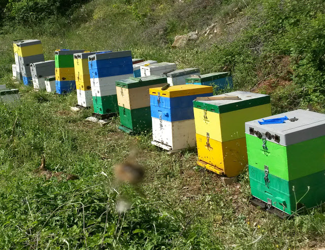 Οι μελισσοκόμοι πρέπει καταθέσουν αίτηση – δήλωση για τις κυψέλες που κατέχουν