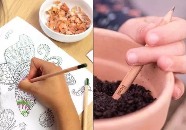 Pensil Ini Dapat Tumbuh Menjadi Tanaman-1
