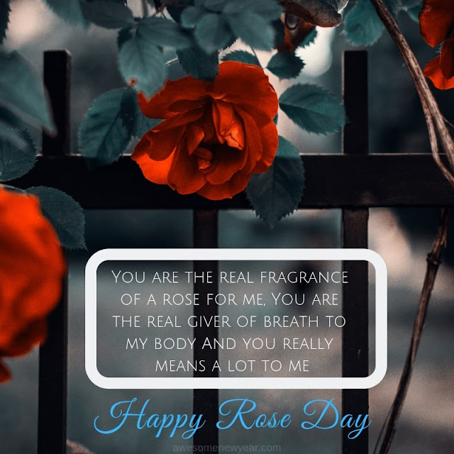 Special Rose Day Quotes