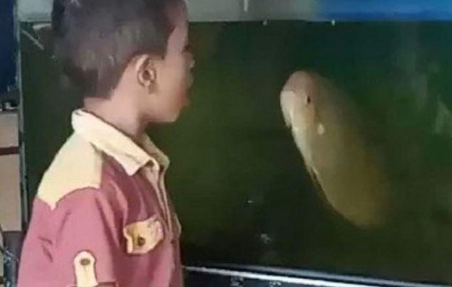 Titisan Aquaman, Bocah Ini Terekam Sedang Adu Mulut Dengan Seekor Ikan Besar