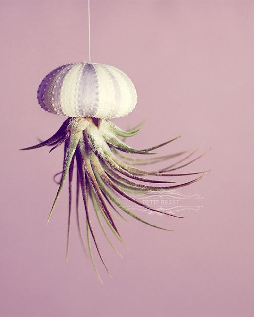 Jellyfish Air Plant Holders 4 Pack: Jellyfish Air Plants...brilliant!!!