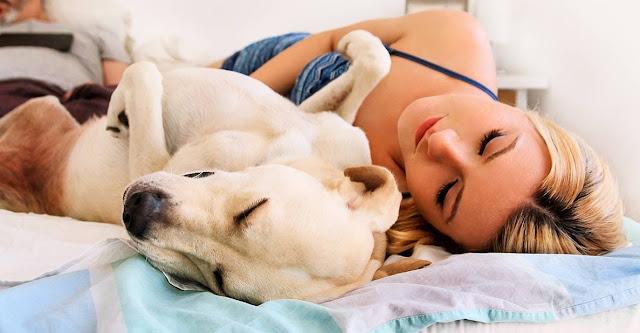 Lasciare il cane dorma nel tuo letto fa davvero bene, secondo gli esperti