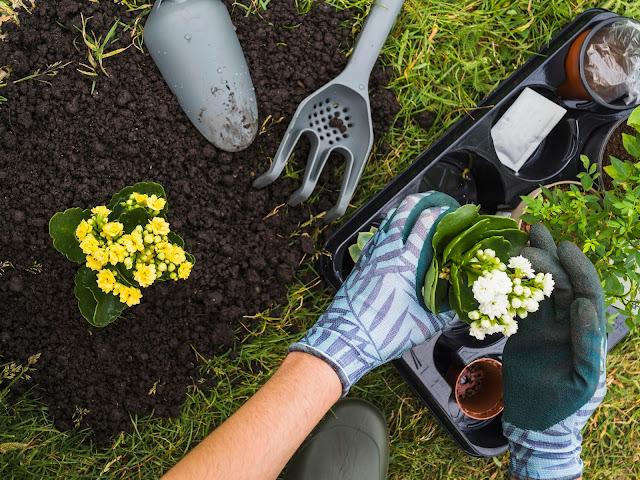 Berkebun Bisa Menghilangkan Stress