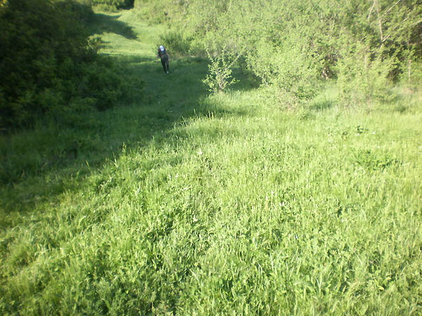 Зеленая поляна недалеко от села Краснолесье