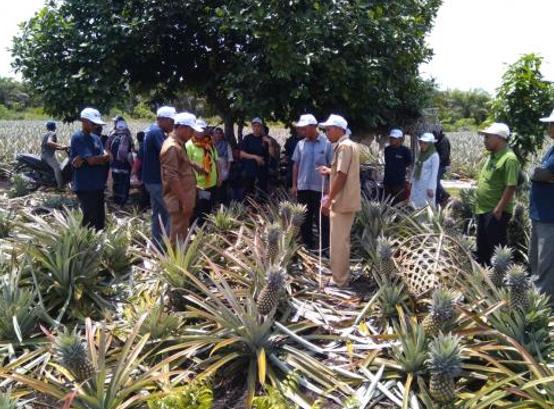 Kembangkan Nanas Desa Penyengat, Perusahaan Sukanto Tanoto Adakan Studi Banding ke Kampung Tanjung Kuras