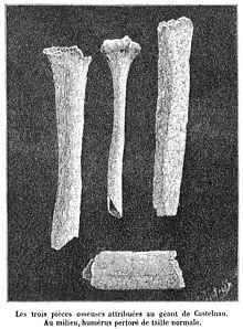 Giant of Castelnau bone remains.