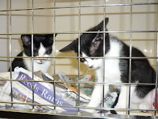 Gorgeous Cats Protection kittens