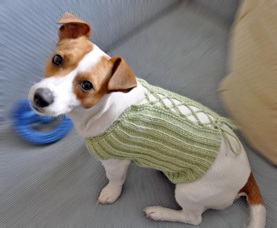 Free Knitting Pattern Jack Russell Dog : Parti Organizasyon Nalan unal: orgu Kopek Kiyafetleri