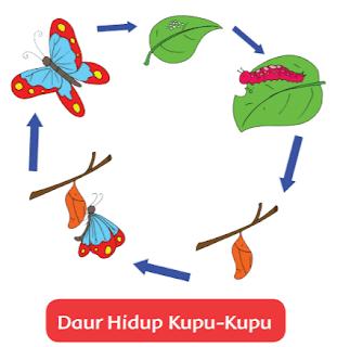 Daur Hidup Kupu-Kupu www.simplenews.me