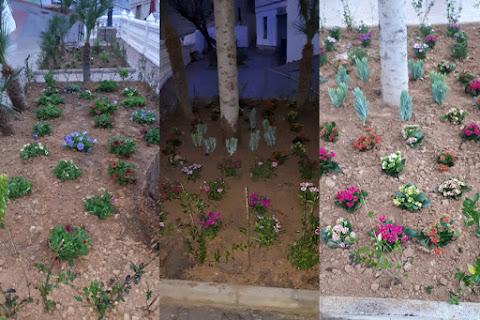 Preparación de terreno para colocar plantas en la población valenciana de Millares