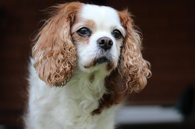 German dog names for girl dog