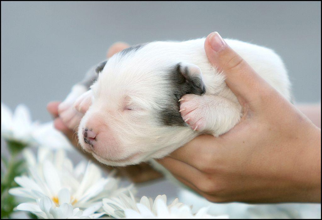 4. Puppy Love by Domain Barnyard