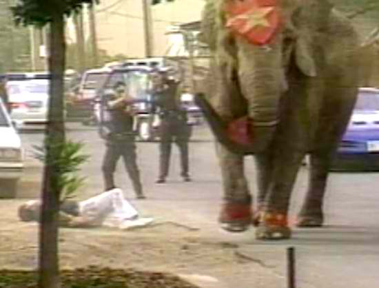 The Heartbreaking Story of Tyke The Circus Elephant