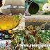 ලංකාවේ ජනප්රිය ගම් නගරවලට නම් හැදුණු හැටි (How Popular Villages And Towns In Sri Lanka Came To Be Known - Gamala Nam)