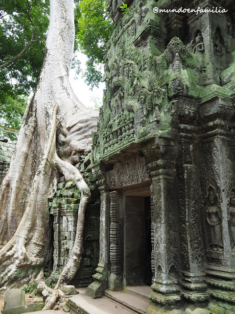Ta Prohm (Angkor)