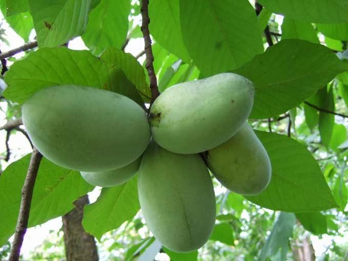 Fruits d 39 hiver rustiques cultiver sous la neige 1 2 - Legumes d hiver liste ...
