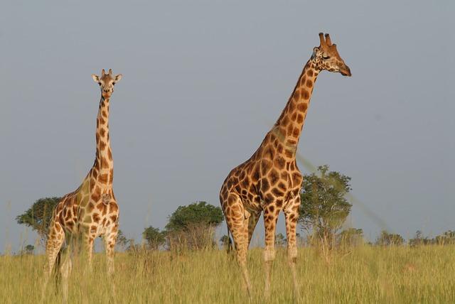 Explore Uganda the Dream Destination for Ultimate Wildlife Safaris