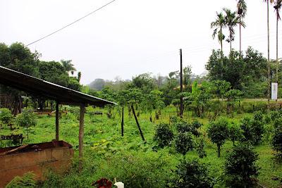 Les plantations de café dans Bolaven Plateau - Laos