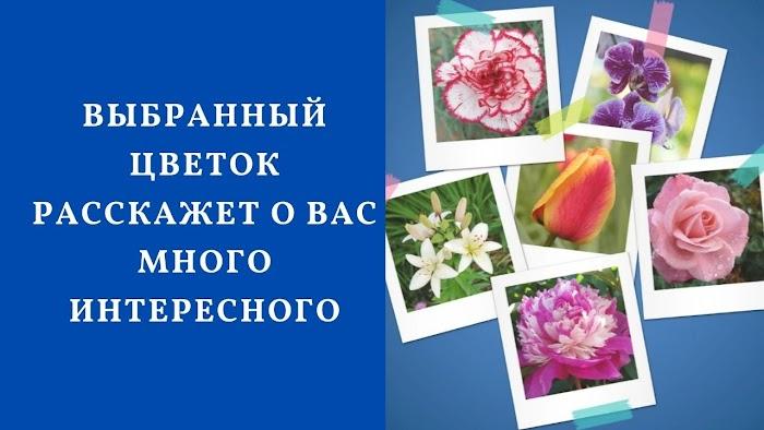 Весенний тест: выбранный цветок расскажет о вас много интересного