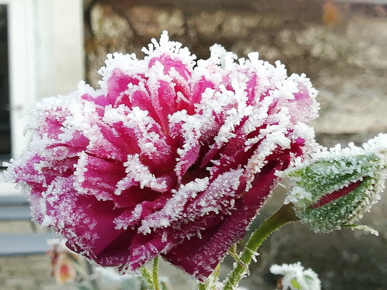 Winterzauber Gärten bei Frost